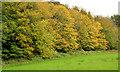 J4681 : Autumn trees, Crawfordsburn by Albert Bridge