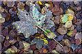 NT1294 : Autumn in Blairadam Forest by William Starkey