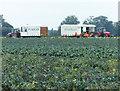 TF4349 : Farm workers near Sea Lane by Mat Fascione