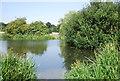 TQ4871 : River Cray by N Chadwick