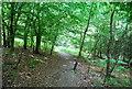 TQ4033 : Footpath, Ashdown Forest by N Chadwick
