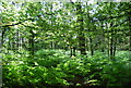 TQ4033 : Ashdown Forest by N Chadwick