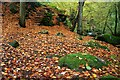SK2579 : Autumn leaves in Padley Gorge by Graham Hogg