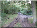 SP0899 : The way back to Hardwick-West Midlands by Martin Richard Phelan