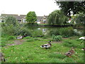 TQ6304 : Peelings Lane Duck Pond by Josie Campbell