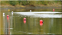 J3371 : Floats, River Lagan, Stranmillis, Belfast by Albert Bridge