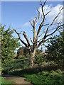 TM1436 : Dead Tree by Keith Evans
