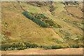 NN2487 : Coniferous plantation on south-east side of Glen Gloy by Trevor Littlewood