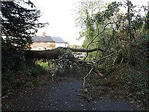 TM3569 : Church Street, Peasenhall by Adrian Cable