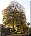 SX9065 : Tree, Old Woods Hill, Torquay by Derek Harper