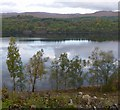 NH2502 : Birch trees by Loch Garry by Craig Wallace