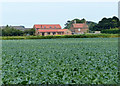 TF3741 : House next to a field of cabbages by Mat Fascione