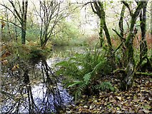 H4963 : Wildlife pond, Seskinore Forest by Kenneth  Allen