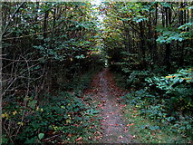 TR1957 : Green Tunnel in Pine Wood by Chris Heaton