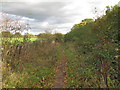 TQ4994 : Path to new planting area, Hainault Forest by Roger Jones