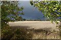 TF0029 : A frame of trees by Bob Harvey