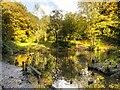 SD8204 : Heaton Park, Small Lake in The Dell by David Dixon
