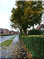 TL2412 : Autumn on Peartree Lane, Welwyn Garden City by Christine Johnstone