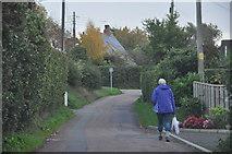 SX9886 : Exton : Green Lane by Lewis Clarke
