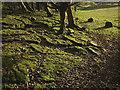 SD5074 : Mossy limestone pavement, Peter Lane by Karl and Ali