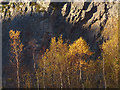 SD4972 : Autumnal silver birches, Warton Crag Quarry by Karl and Ali