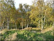 SE0023 : Hebden Royd FP114 approaching birch woodland by Humphrey Bolton
