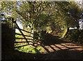 SX3361 : Gate, Tilland by Derek Harper