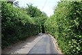 TQ3933 : Legsheath Lane by N Chadwick