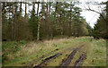 SE7795 : Forest ride in Cropton Forest by Trevor Littlewood