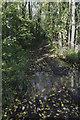 TR0642 : Waterlogged Byway through Nackholt Wood by Julian P Guffogg