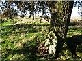 TQ9367 : Elmley Graveyard by Chris Whippet