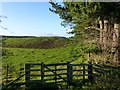 NU1720 : Gate at south end of Craggy Wood by Russel Wills