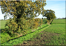 TM4494 : Trees on a field boundary by Evelyn Simak