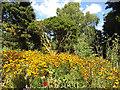TQ4675 : Wild flower garden, Danson Park by Stephen Craven