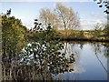 SJ8082 : Pond near Manchester Airport by David Dixon