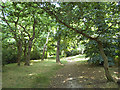 TQ4678 : Path through Bostall Woods by Stephen Craven