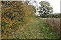 TL0530 : Path by a stream by Philip Jeffrey