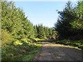 NS7582 : Logging road, Denny Muir by Richard Webb
