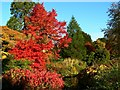 ST3708 : Autumn colours and an ornamental pond, Cricket St Thomas, Chard by Brian Robert Marshall