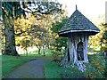 ST3708 : Tree stump, Cricket St Thomas, Chard by Brian Robert Marshall