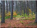 NY7888 : Woodland near Redheugh by Andrew Curtis