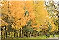 J3472 : Autumn trees, Ormeau Park, Belfast (3 in 2013) by Albert Bridge