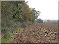 TL6123 : Hedgerow along arable field, Little Easton by Roger Jones