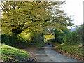 SU7532 : Lane to Empshott by Robin Webster