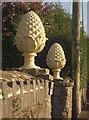 SX9165 : Pineapples, Westhill Road, Torquay by Derek Harper