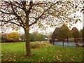 ST5669 : King's Head Lane Park, Bishopsworth by Derek Harper