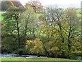 SH8551 : The River Merddwr, west of Pentrefoelas by Christine Johnstone