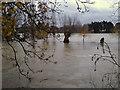 SP2965 : River Avon by Emscote gardens, Warwick 2012, November 22, 15:48 by Robin Stott