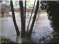 SP2965 : River Avon by Emscote Gardens, Warwick 2012, November 22, 15:56 by Robin Stott