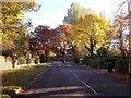 SK4822 : Turvey Lane running through the trees by Ian Calderwood